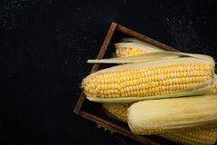 Fresh whole corn cob in wooden box.  Royalty Free Stock Images