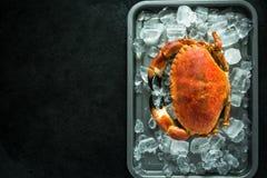 Fresh whole crab. Border dark slate background Stock Image