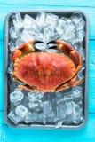 Fresh whole crab on vibrant background. Fresh whole crab on vibrant wooden background Stock Photo