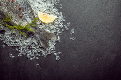 Fresh whole fish cooling on ice Royalty Free Stock Photo