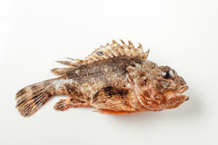 Fresh whole fish Royalty Free Stock Photos