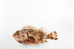 Fresh whole fish Stock Photography