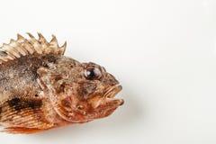 Fresh whole fish Stock Photo