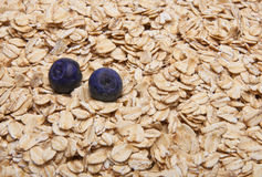 Fresh Whole Grain Oats and Blueberries Background. Stock Photography