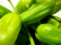 Fresh whole green peppers. Macro background of fresh whole green peppers with white background Royalty Free Stock Image