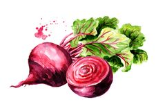 Fresh whole and half Beet root with green leaves. Watercolor hand drawn illustration isolated on white background stock illustration
