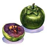 Fresh whole and half black ripe sapote isolates, watercolor illustration Stock Image