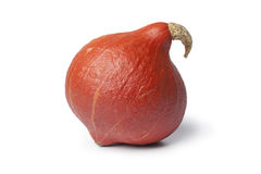 Fresh whole hokkaido pumpkin Stock Image