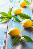 Fresh whole lemons wish leaves on wooden old blue background Stock Photos