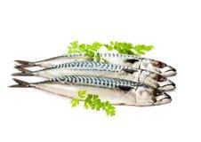 Fresh  whole mackerel  fish isolated on white background Stock Photos