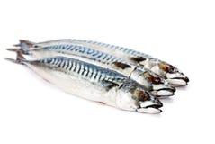 Fresh  whole mackerel fish isolated on white background. Fresh  whole mackerel  fish isolated on white background Royalty Free Stock Image