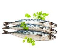 Fresh  whole mackerel  fish isolated on white background Stock Photo