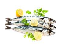 Fresh  whole mackerel fish  isolated on white background. Fresh  whole mackerel fish isolated on white background Royalty Free Stock Photos