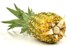 Fresh whole pineapple Royalty Free Stock Images