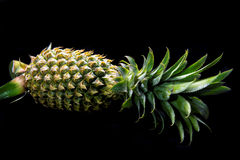 Fresh whole pineapple. Isolated. On a black background Royalty Free Stock Photos