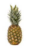 Fresh whole pineapple. Stock Photos