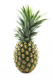Fresh whole pineapple on white background Royalty Free Stock Images