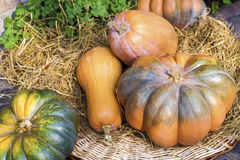 Fresh whole pumpkins of different shapes Royalty Free Stock Photo