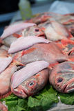 Whole Red Snapper in Fish Market Royalty Free Stock Photography