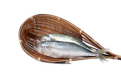 Fresh whole round indian mackerel in bamboo dipper on white Stock Images