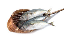 Fresh whole round indian mackerel in bamboo dipper on white Stock Image