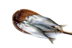 Fresh whole round indian mackerel in bamboo dipper on white Royalty Free Stock Photos