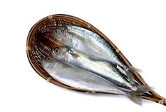 Fresh whole round indian mackerel in bamboo dipper on white Stock Photography