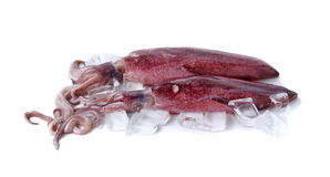 Fresh whole round squid with ice cube on white Stock Image