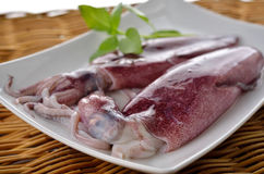 Fresh whole round squid on plate Stock Photography
