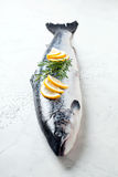 Fresh whole salmon Stock Images