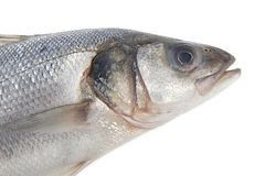Fresh whole seabass Stock Photo