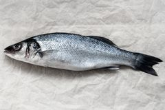 Fresh whole silver sea bass on vintage old parchment. Horizontal top view crop with text space Royalty Free Stock Images