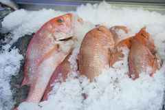 Fresh Whole Snapper Stock Images