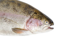 Fresh whole trout fish face Stock Image