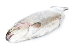 Fresh whole trout Stock Photography