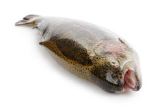 Fresh whole trout Stock Images