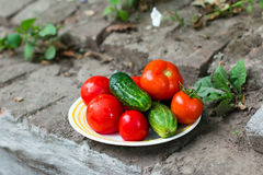 Fresh whole vegetables, cucumbers and tomatoes in a bowl Stock Photos