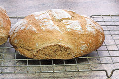 Fresh wholegrain bread cooling on a wire tray. Royalty Free Stock Photos