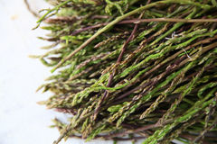 Fresh wild asparagus for background. Detailed shot of fresh raw wild asparagus for background Stock Photo