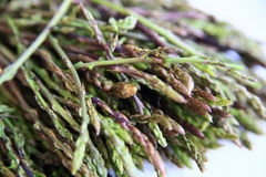 Fresh wild asparagus for background. Detailed shot of fresh raw wild asparagus for background Royalty Free Stock Photo