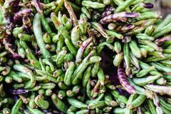 Fresh wild beans on market stock photos