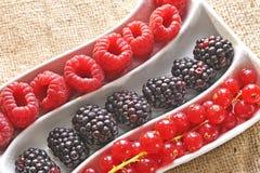 Fresh wild berries Stock Photography