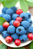 Fresh wild berries Stock Photo