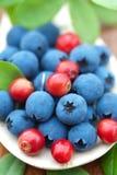 Fresh wild berries Stock Photo