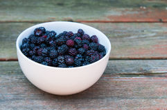 Fresh wild blackberries Royalty Free Stock Image