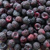 Fresh wild blackberries Royalty Free Stock Photos