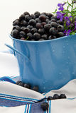 Fresh Wild Blueberries Royalty Free Stock Photography