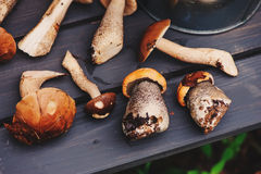 Fresh wild edible mushrooms on wooden bench Royalty Free Stock Image