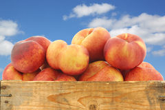 Fresh wild (flat) nectarines in a wooden crate Royalty Free Stock Photo
