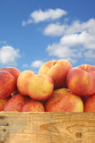 Fresh wild (flat) nectarines in a wooden crate Stock Photography